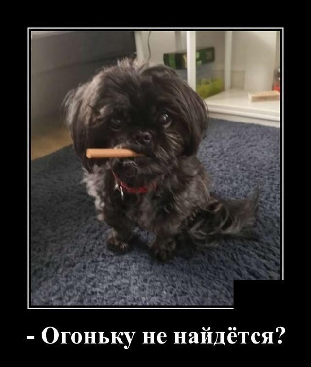 Демотиватор про собаку с сигарой