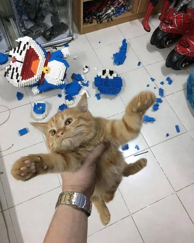 Кот разрушил лего