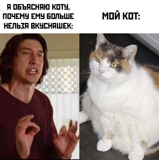Я и мой кот