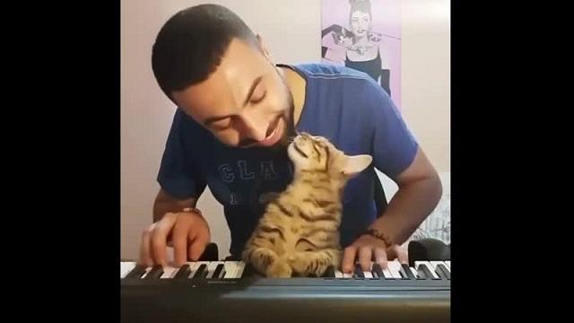 Кот и мужчина за синтезатором