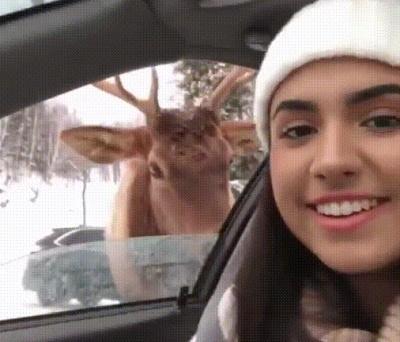 Превью девушка и олень