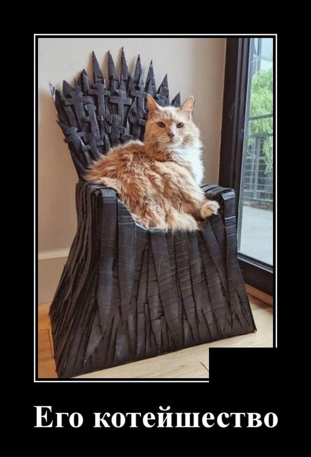 Демотиватор про кота на троне