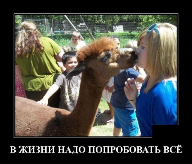 Демотиватор про поцелуи