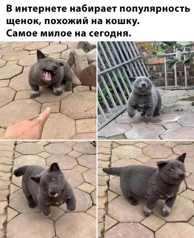 Милый щенок покоряет социальные сети