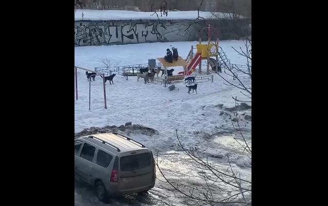 Дети и собаки на площадке