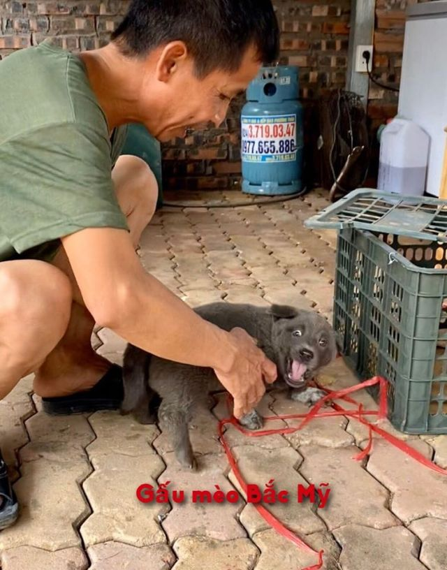 Серый щенок по кличке Дуй с хозяином