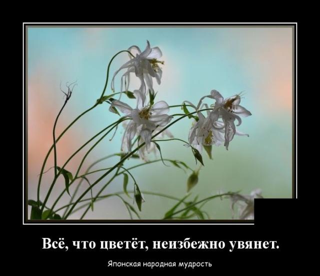 Демотиватор про цветы