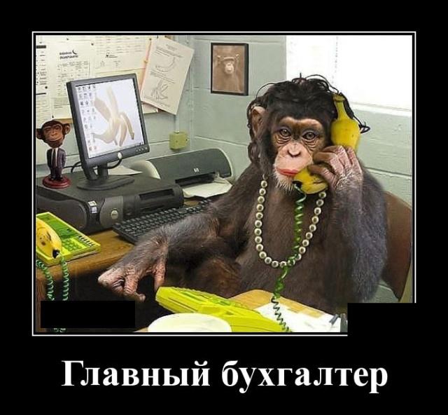 Демотиватор про бухгалтеров