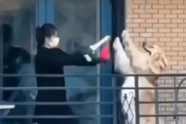 Китаец в маске дерется с собакой