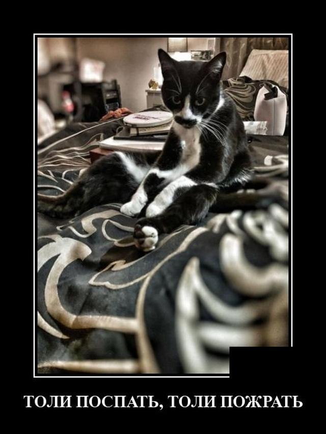 Демотиваторы про ленивого кота