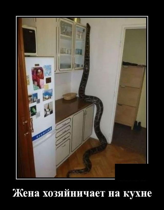 Демотиватор о жене и змеях