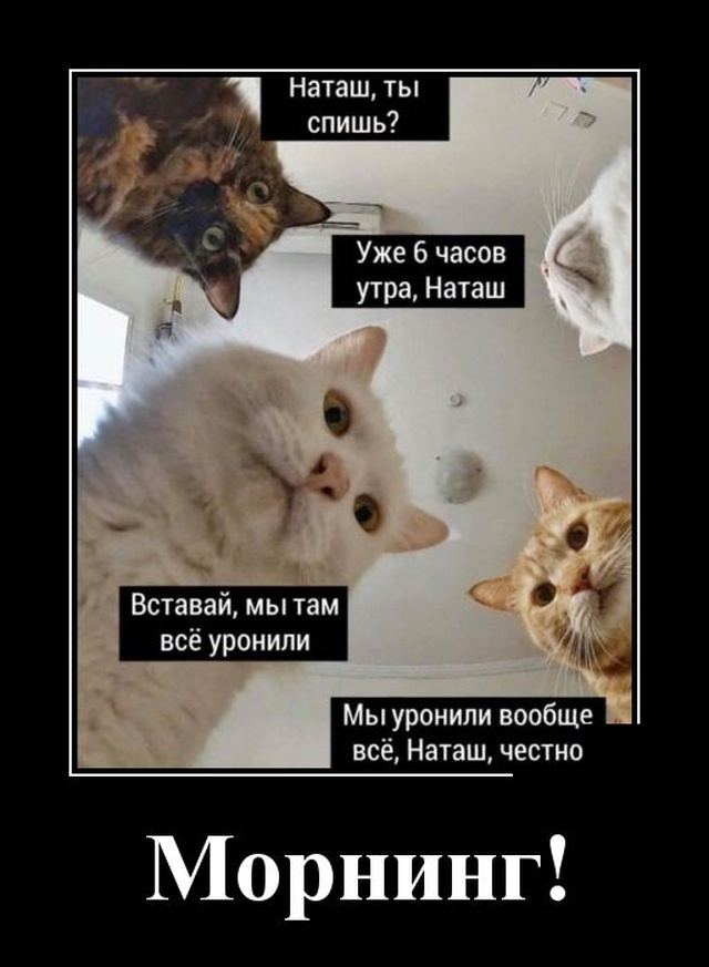 Демотиватор о котах
