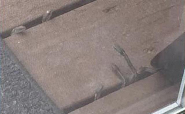Змеи в полу