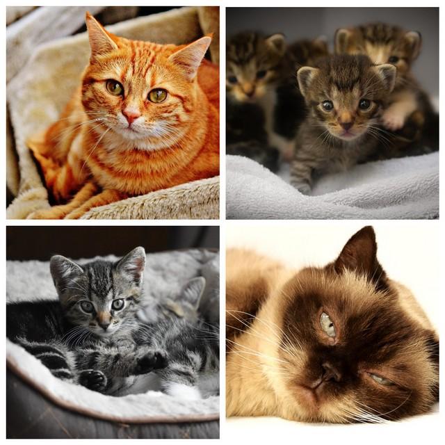 Как рожают кошки и воспитывают котят (7 фото)