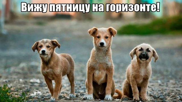 Трынделка - 04.03.2020