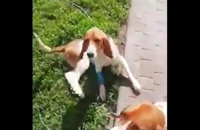 Собака лежит на траве