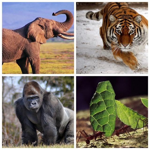 Самые сильные животные на Земле (7 фото)