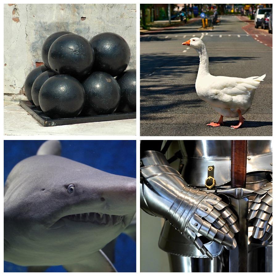 Странные находки в желудке акулы (7 фото)