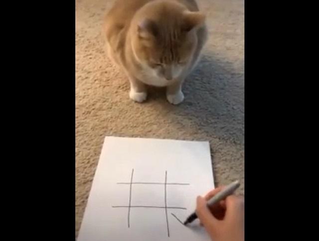 Играет с котом