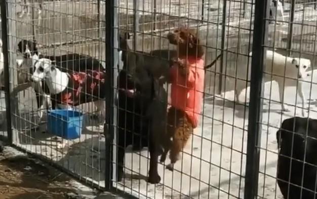 Собака лезет через забор