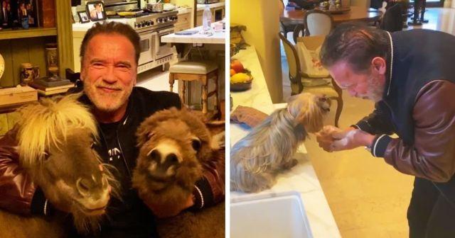 Арнольд Шварценеггер с животными