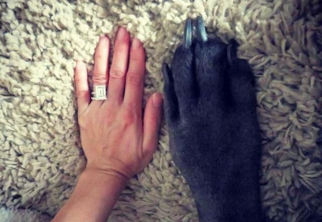 Лапа собаки и рука девушки