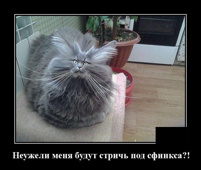 1584627643_demotivatory_02.jpg