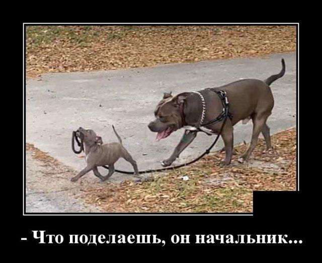1584627673_demotivatory_19.jpg