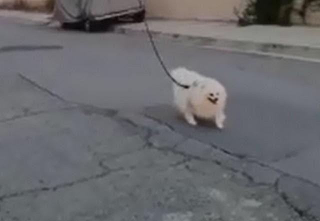 Собака гуляет по улице