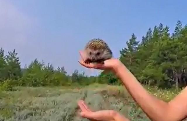 Ежик на руках человека