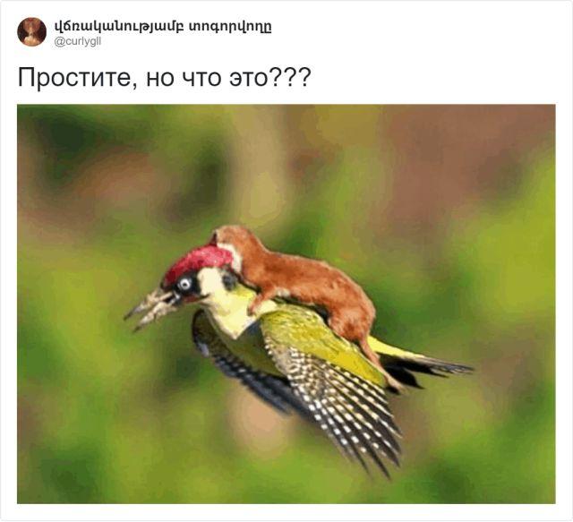 Зоологический тред в Твиттере: пользователи поразились размерами ласки (10 фото + видео)