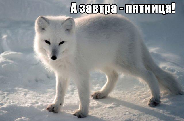 Трынделка - 26.03.2020