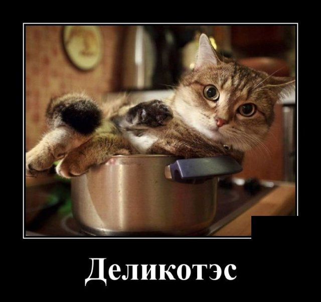 1585747329_demotivatory_05.jpg