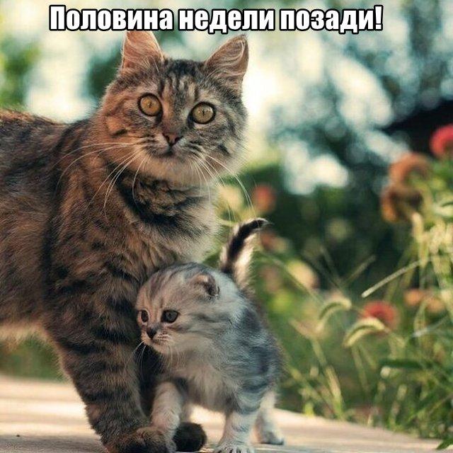 Трынделка - 01.04.2020