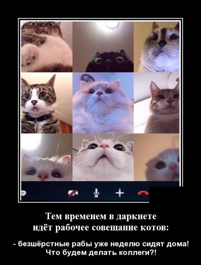 Демотиватор про котов