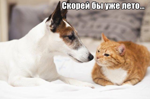 Трынделка - 06.04.2020