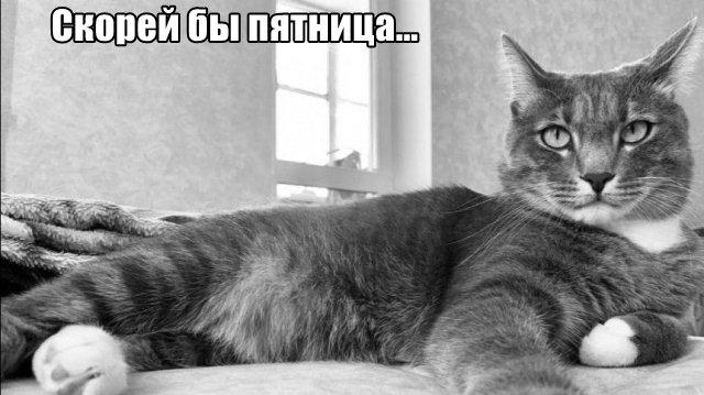 Трынделка - 07.04.2020