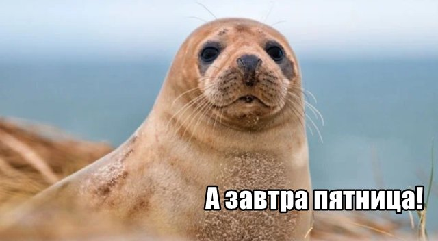 Трынделка - 09.04.2020