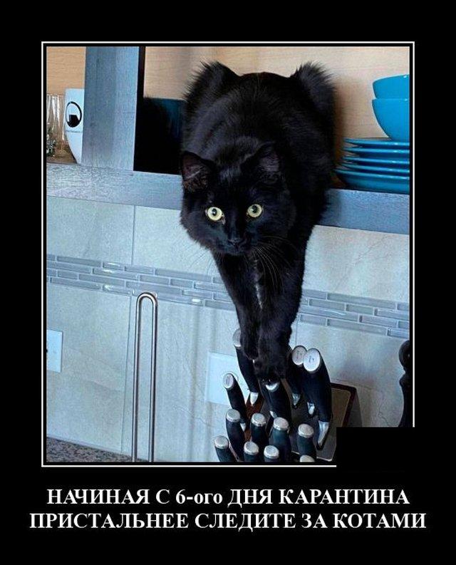 Демотиватор про кота и карантин