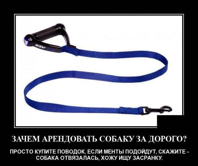 1586531023_demotivatory_11.jpg