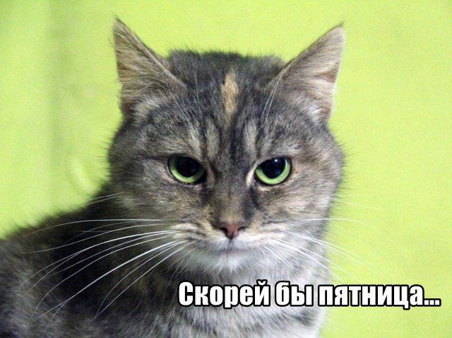 Трынделка - 14.04.2020