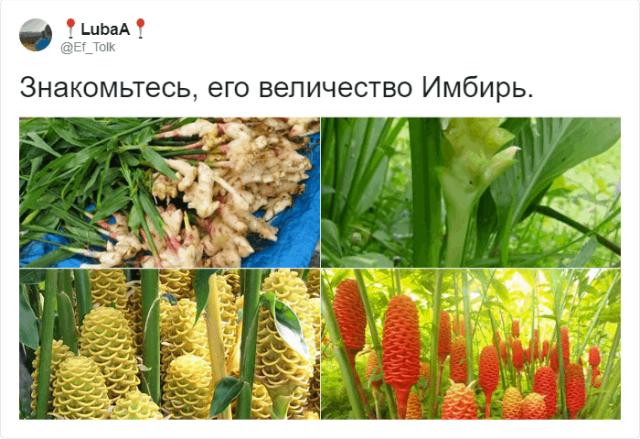 Пользователи Сети шутят про лимоны и имбирь