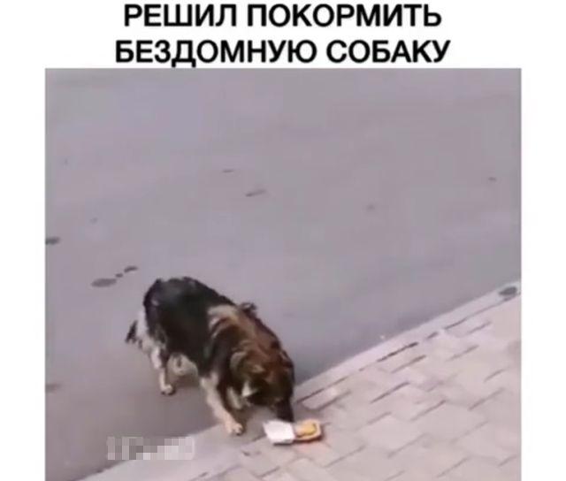 Парень решил покормить бездомную собаку наггетсами из McDonald's