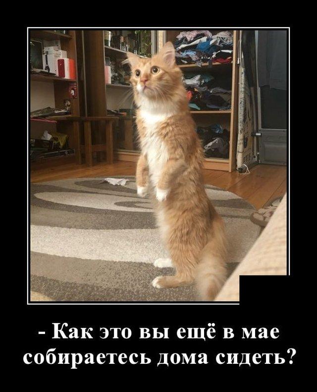 1588254284_demotivatory_09.jpg