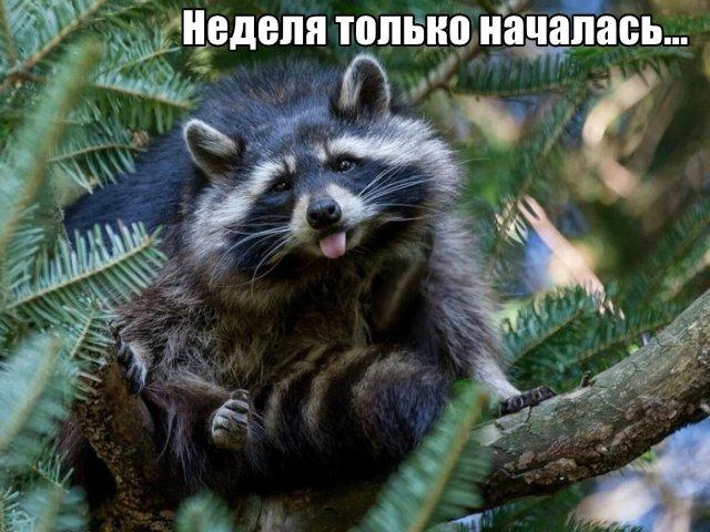 Трынделка - 04.05.2020