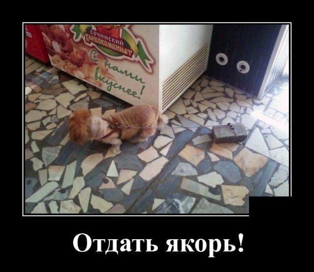 Демотиватор про собаку на поводке