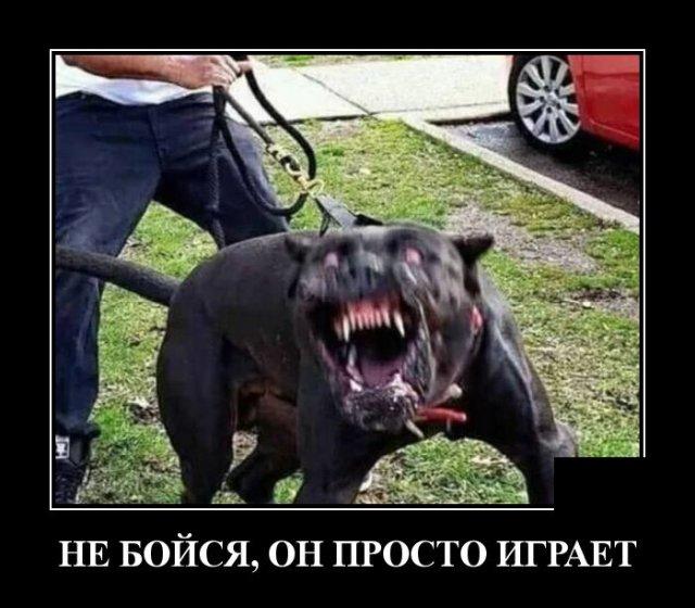 Демотиватор про собаку, которая не кусается