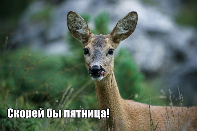 Трынделка - 05.05.2020