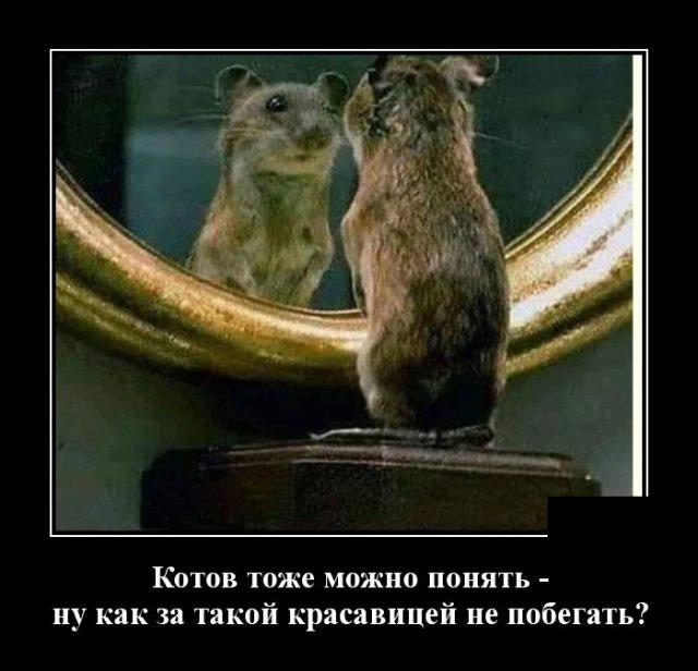 Демотиватор про мышей