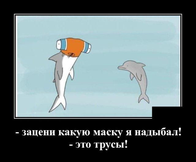 Демотиватор про акул